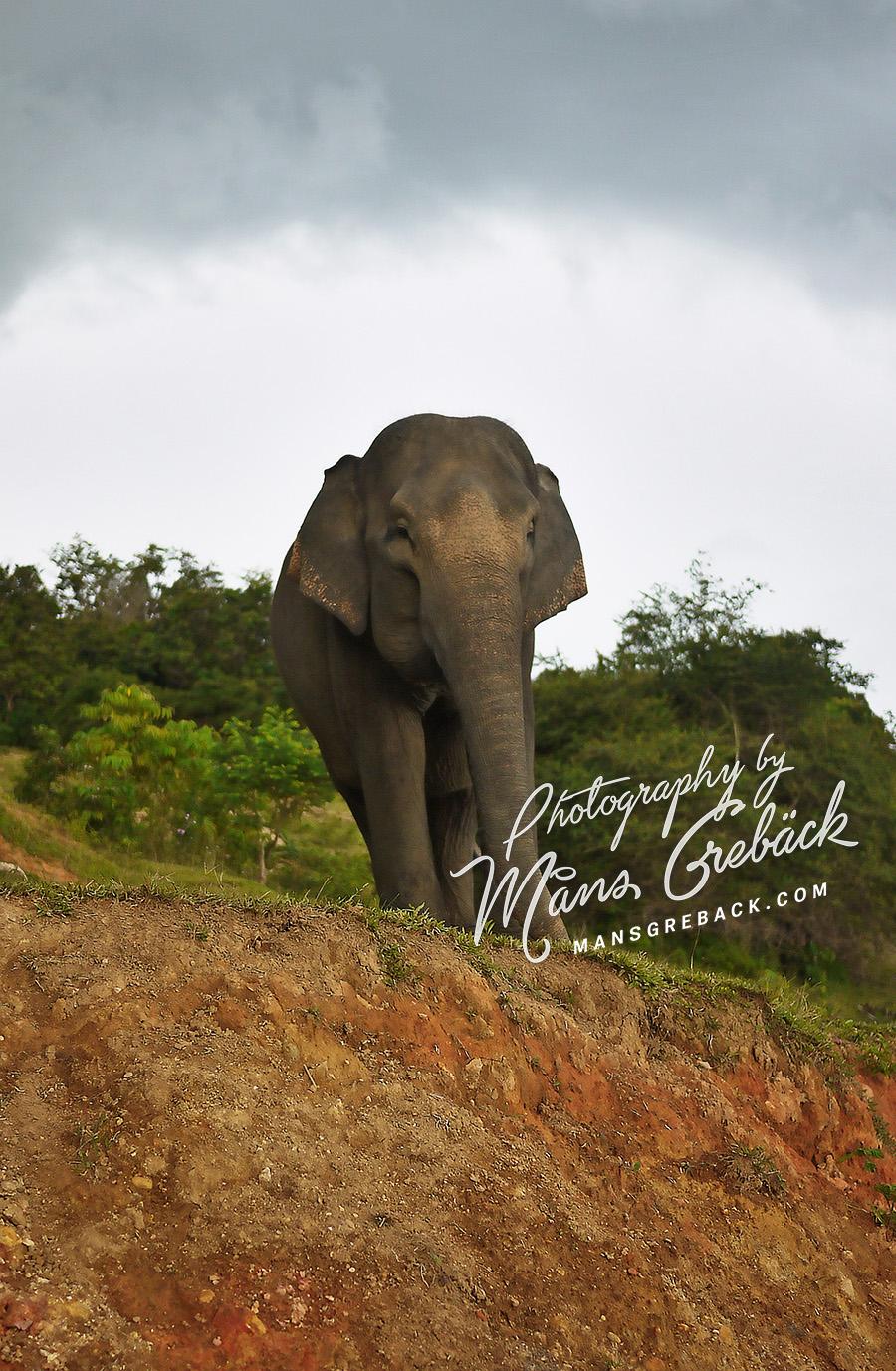 Elephant Earth