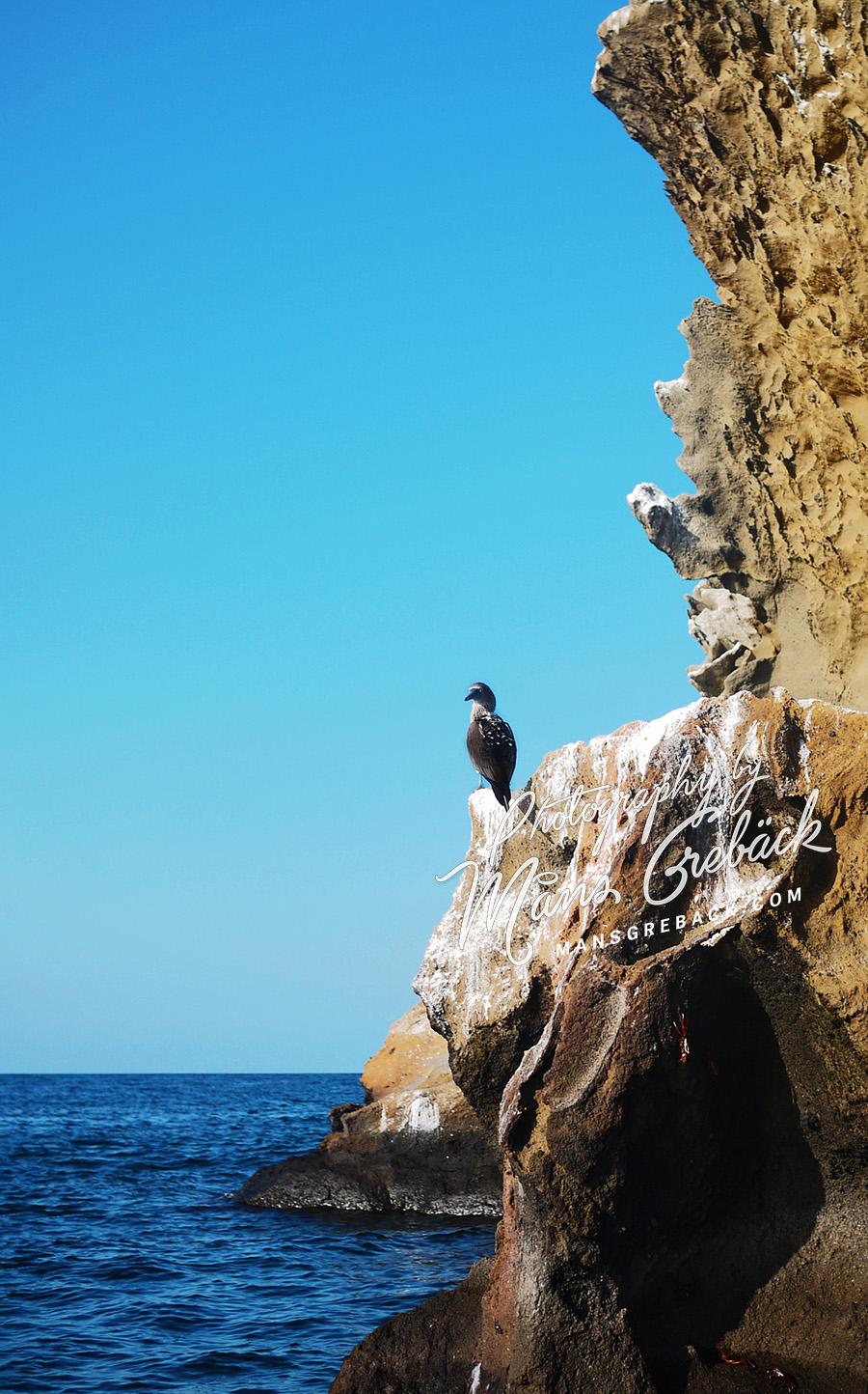 Bird Cliffs