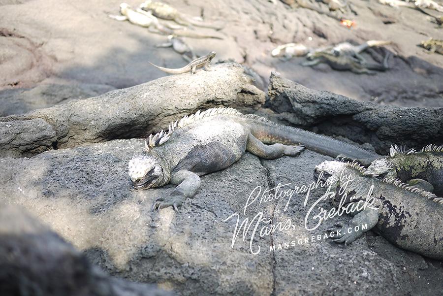 Lizard Rock