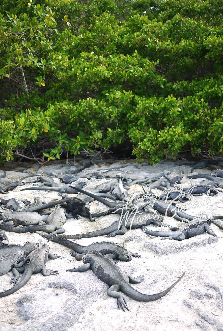 Lizards Beach