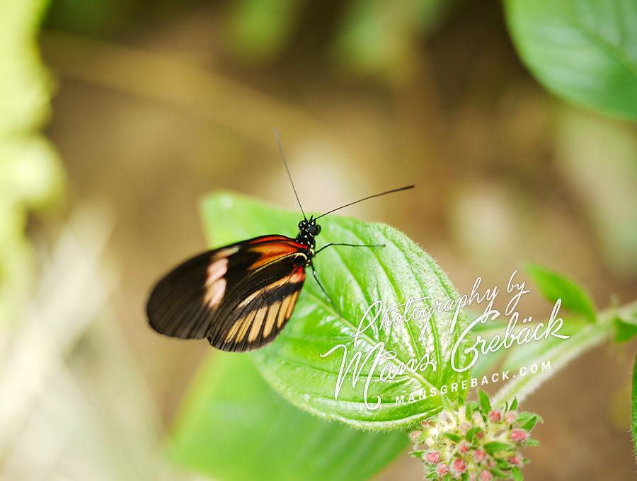 Orange Black Butterfly