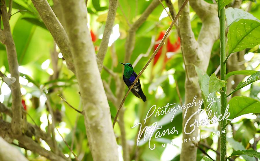 Hummingbird Forest