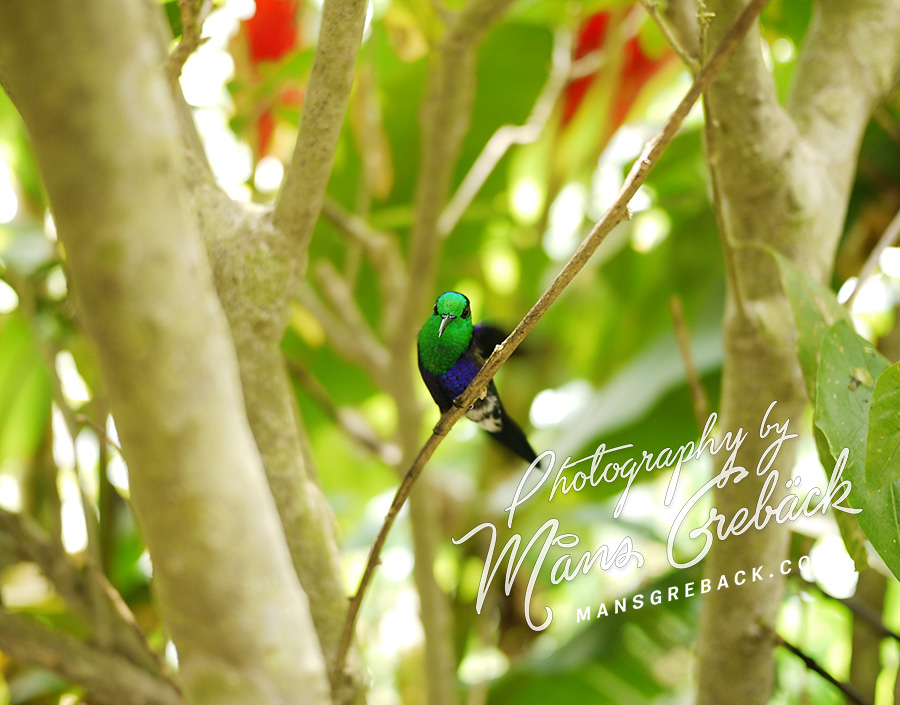 Hummingbird Stick