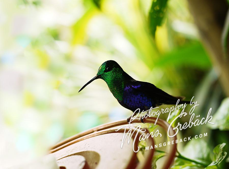 Closeup Hummingbird