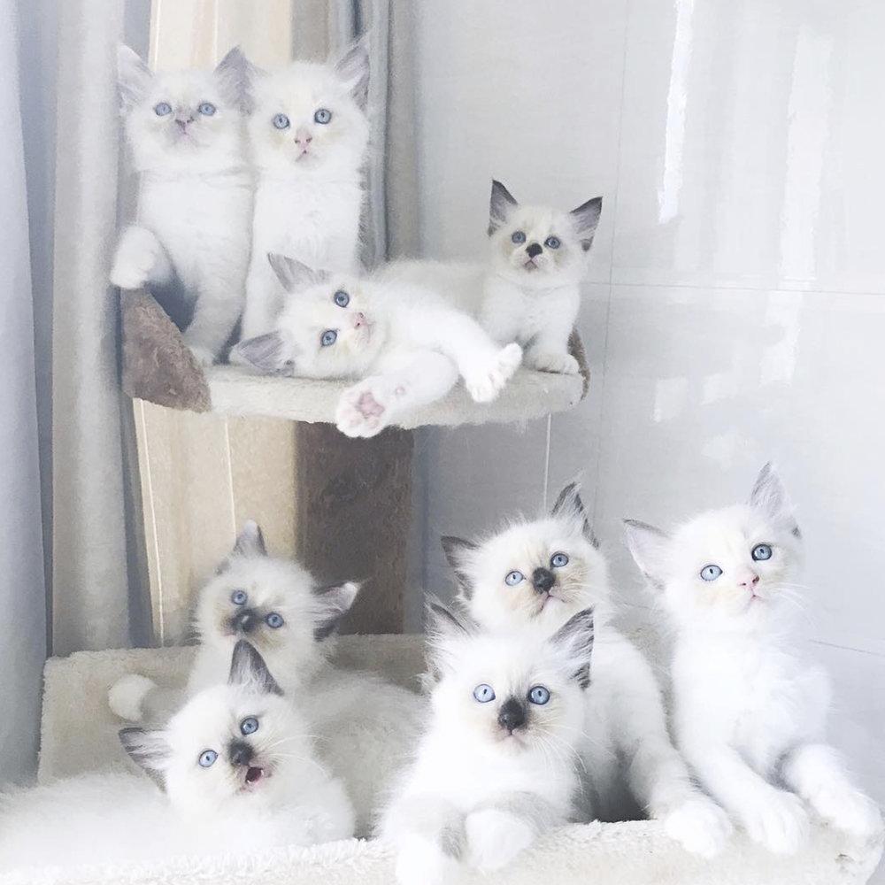 Cat Breeder   Owner of 22 cats. I scoop poop everyday.