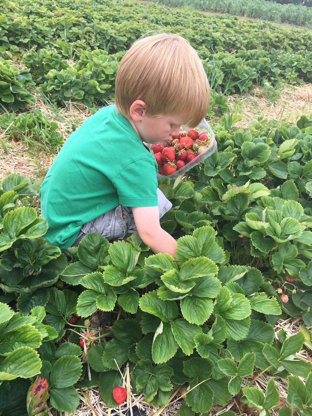 Fruit picking! Great way to get kids interested in fruit