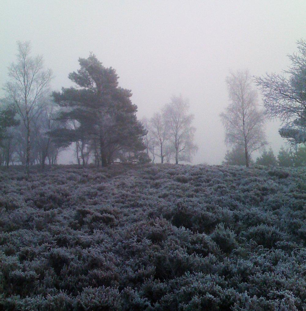 blue hue in winter 2.jpg