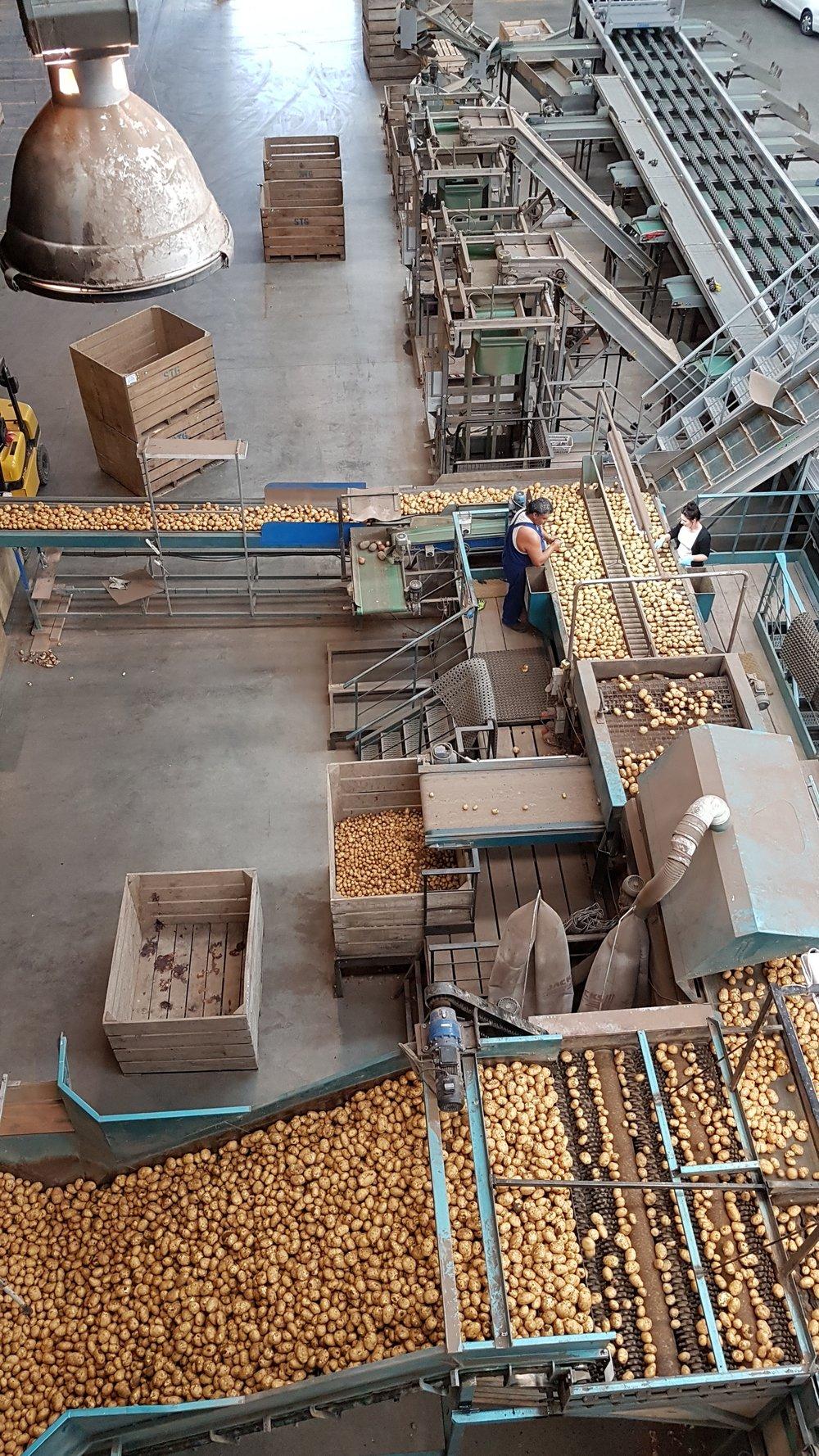 sorting conveyer line.jpg