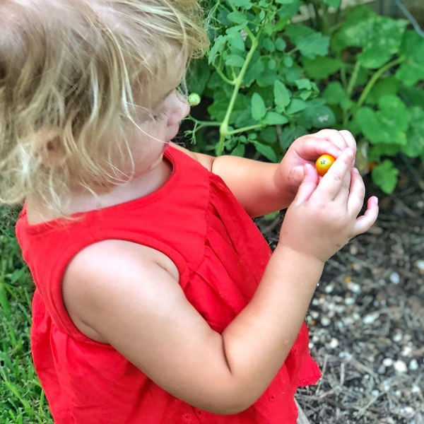 gardening with kids tomatoes 4.jpg