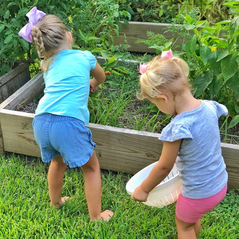 gardening with kids sweet potatoes 2.jpg