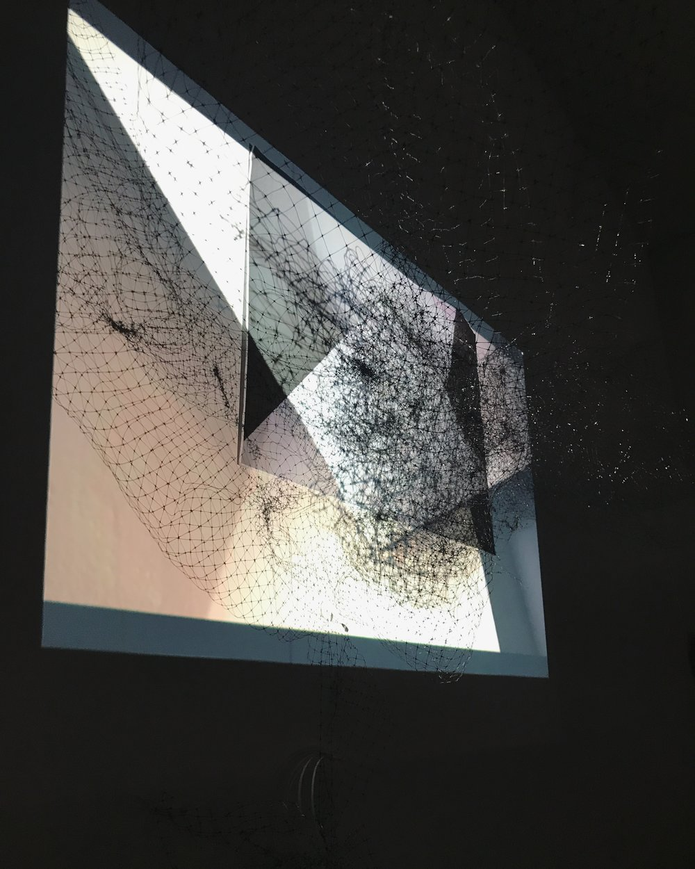 Untitled. Installation View. B&W Photographic Print, Projection, Bird Netting (2017)