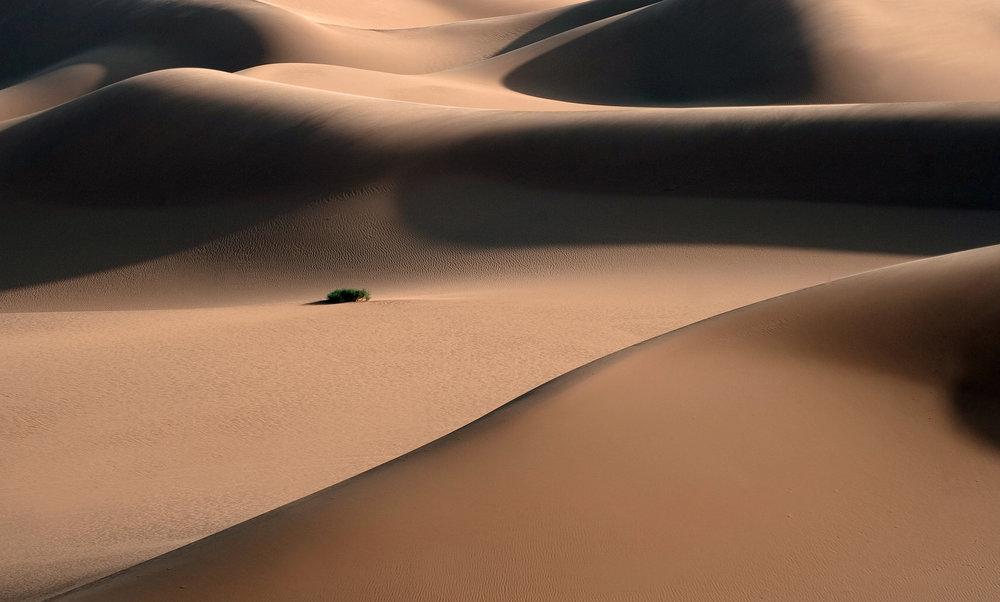 Libyan Desert Live