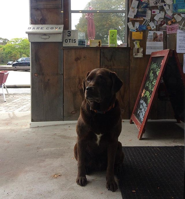 Pets prohibited, owners accepted. Free kisses for treats! . . . . . . . #dogslife #beggingfortreats  #brownlab #labradorretriever #labrador #chessapeakebayretriever #coffeetime #coffeelover #chocolatelab #ignewengland #igboston #pictureoftheday #igboston #scituate #cohassetharbor #cohasset #dayoff #beautifulplace #travelblogger #newengland #happydog #saddog #adogslife #dayinthelife #fromwhereistand #adorable #dogtreats #silverpixstudios #barecove #labsofinstagram #dogsofinstagram