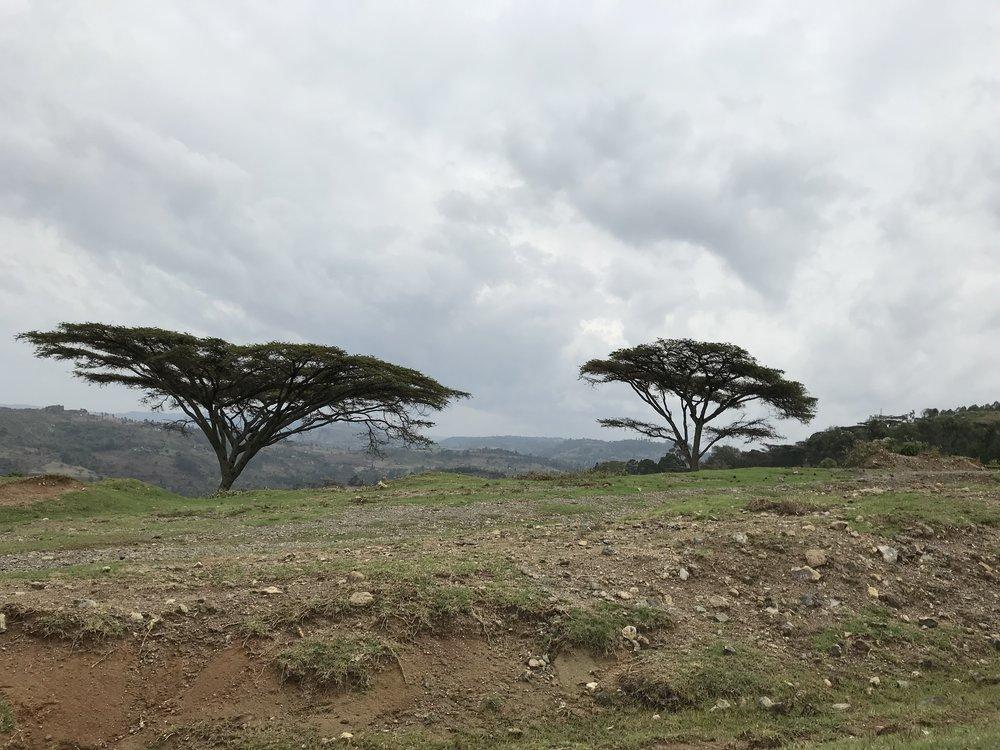 Day 16 trees.jpg