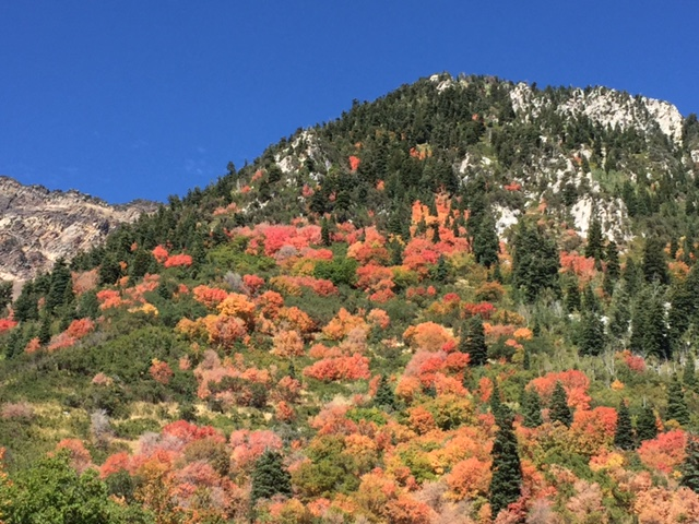 Fall colours in the mountains of Utah