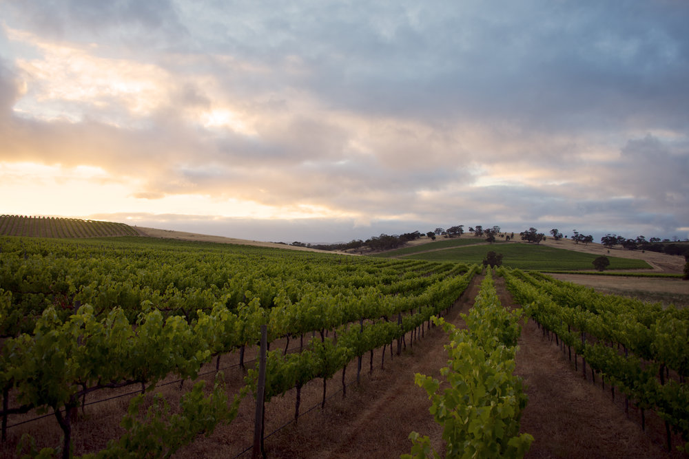 Barossa Valley, South Australia -