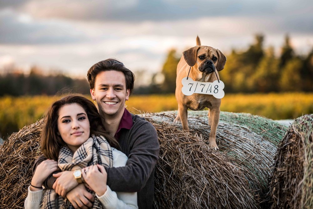 Save the date with the dog on a hay bale in the field at Glenn Vineyard in Michigan