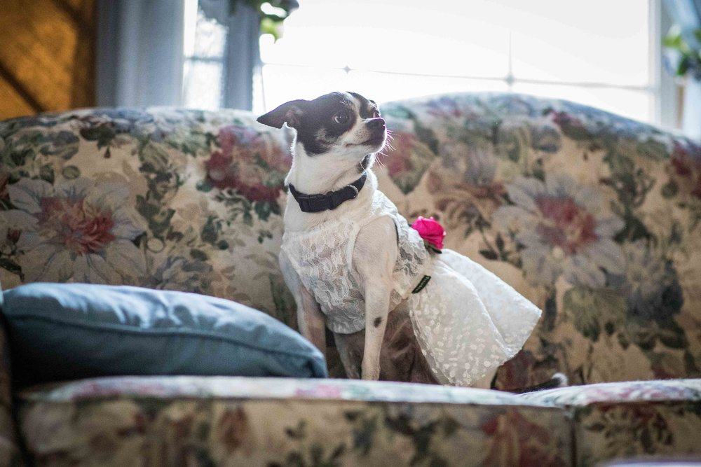 a dog wearing a white wedding dress with pink flowers sits on a couch