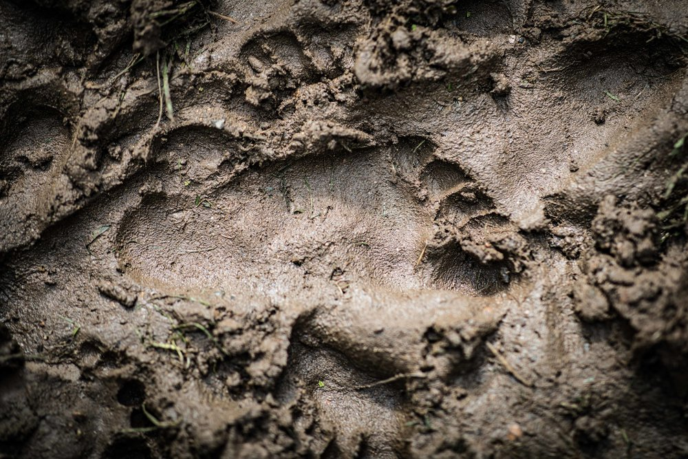 an imprint of a child's foot in the mud