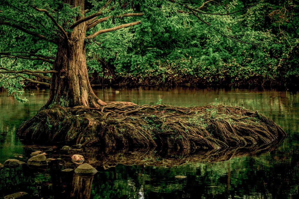 Christopher Deau Photography- copy.jpg