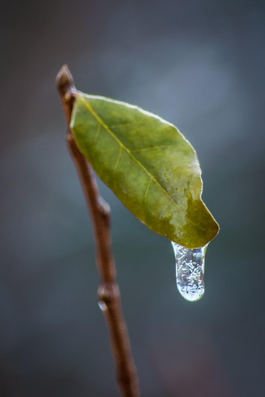 Christopher Deau Photography--4.jpg