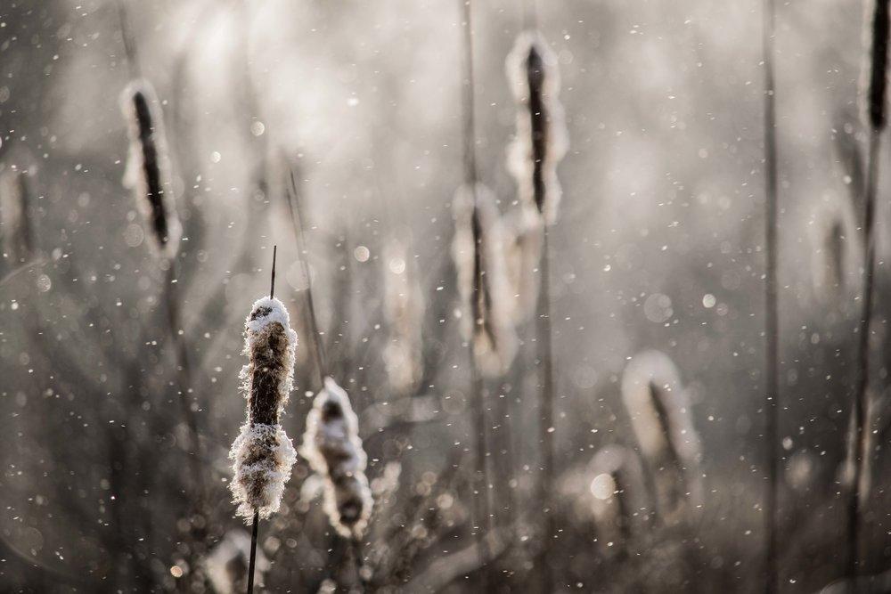 Christopher Deau Photography-2-2.jpg