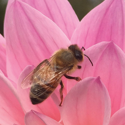CAMPAIGN: SWEET VIRGINIA FOUNDATION