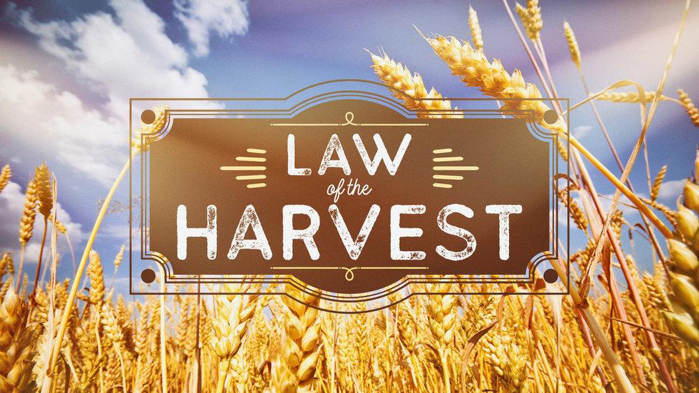 Harvest title.jpeg