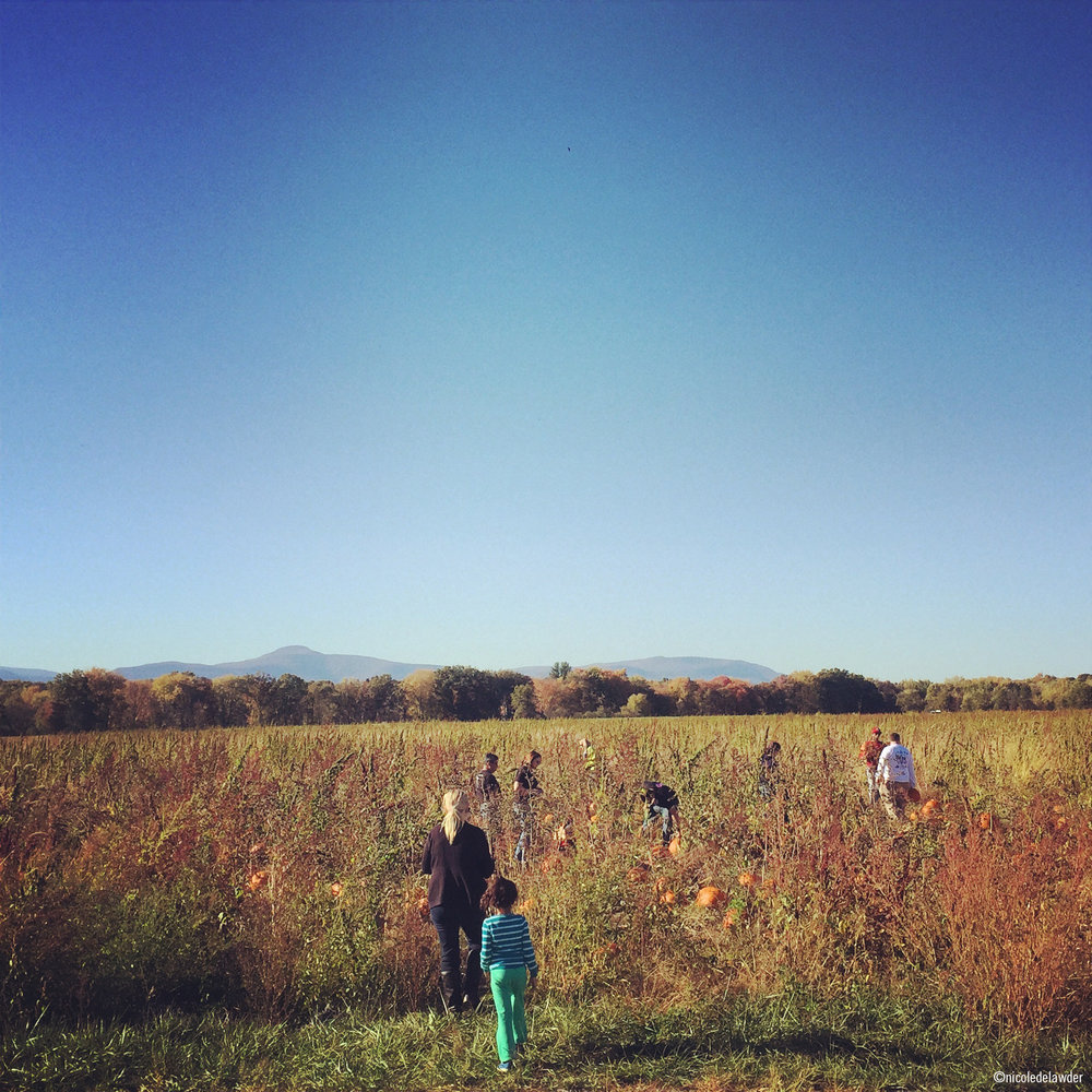 Fall_Pumpkin Patch_ND.jpg