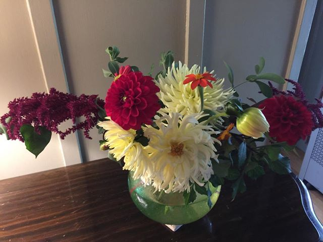 Astonished by the bounty of my garden. #autumn #stillblooming