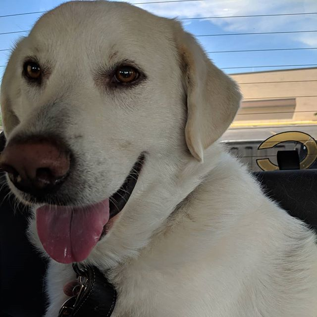 Please welcome Rocky! He's a 3yr old lab/pyr mix.  House trained and has lived with other dogs and kids.