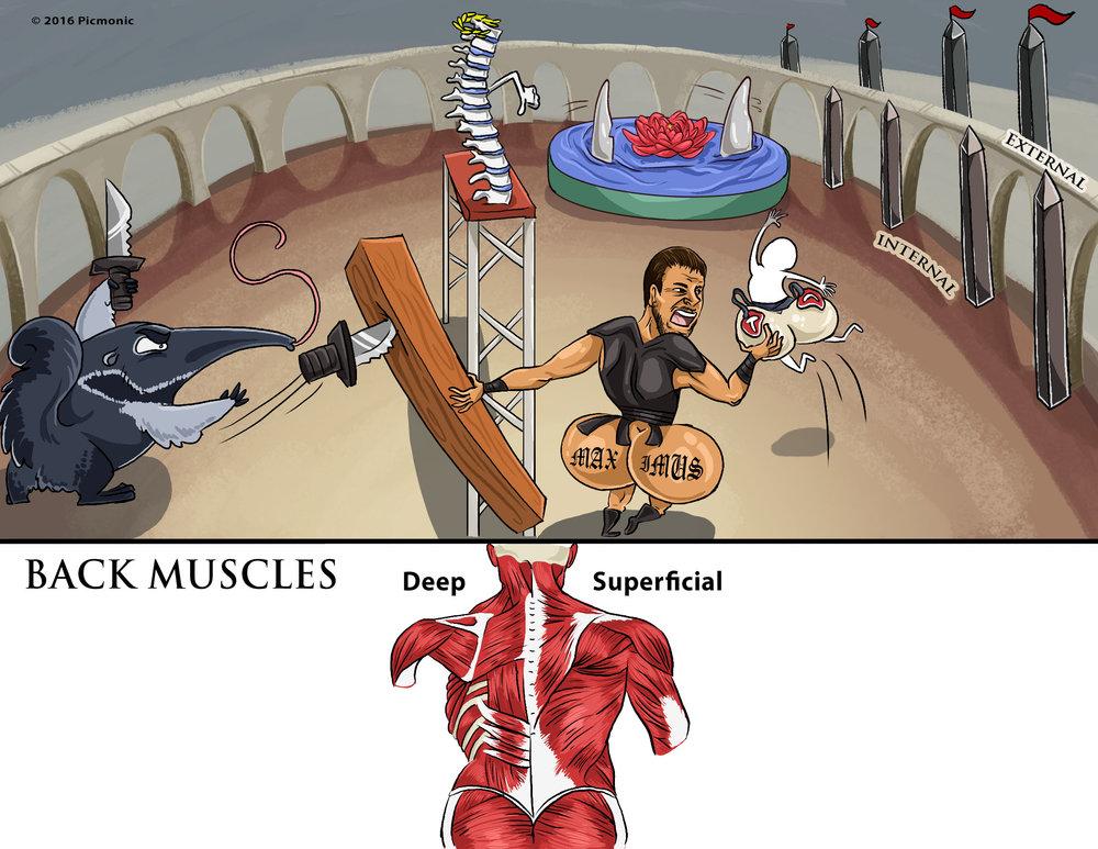 Back Muscles Picmonic