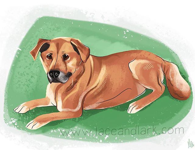 It was an honor to do this memorial piece for the brave and handsome Hobo!  Message me to begin your own pet portrait today! They would make a great gift for he holidays!  #illustration #drawing #art #cartoon #cartoondog #digitalart #digitalillustration #dog #memorial #dogsofinstgram #dogsofinsta #mixedbreedpureheart #petportrait #portrait #azart #azartist