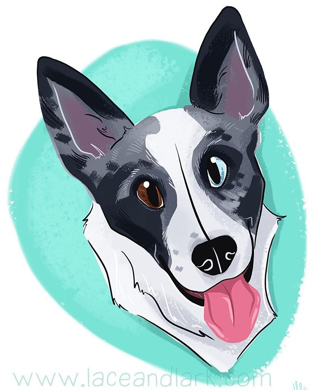 @sleepwoehlcker's Leeloo is so cute! Look at that spotty face! Email me at Melanie@laceandlark.com to start your own pet portrait!  #digitalart #digitalillustration #art #illustration #cartoon #cartoondog #digitalart #azart #azartist #artistsofinstagram #dailydog #dogart #herdingdog #merle #bluemerle #puppy #dog #portrait #petportrait
