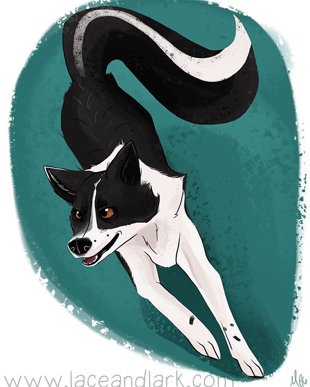 Love the direction I got for this portrait of @brackney_dogs' Skunk! Adding a more skunk looking tail and giving him an active pose was really fun!  Get a portrait of your dog doing its favorite activity! Email me at Melanie@laceandlark.com to start your pet portrait! -- -- #illustration #digitalillustration #digitalart #art #cartoon #cartoondog #bordercollie #bordercolliesofinstagram #agility #agilitydog #dogart #portrait #petportrait #dailydog #azart #azartist