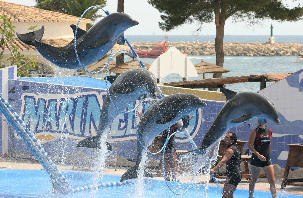 Captive_Dolphins.jpg