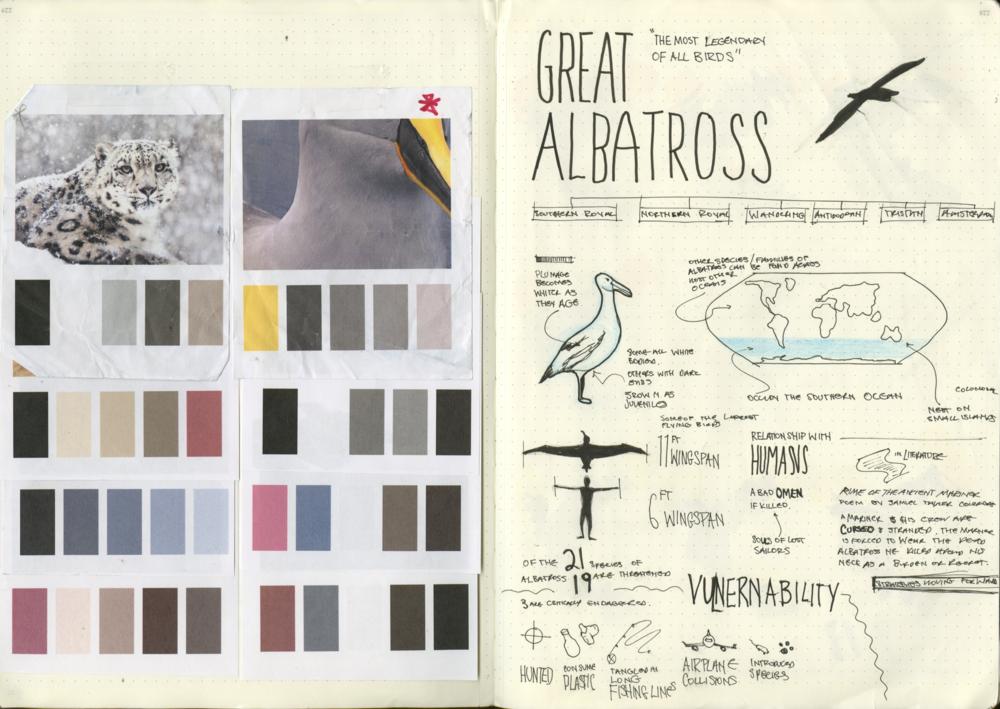 2_albatross.png