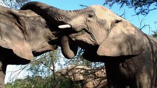 elephants-196613__180.jpg