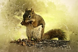 squirrel-1753747__180.jpg