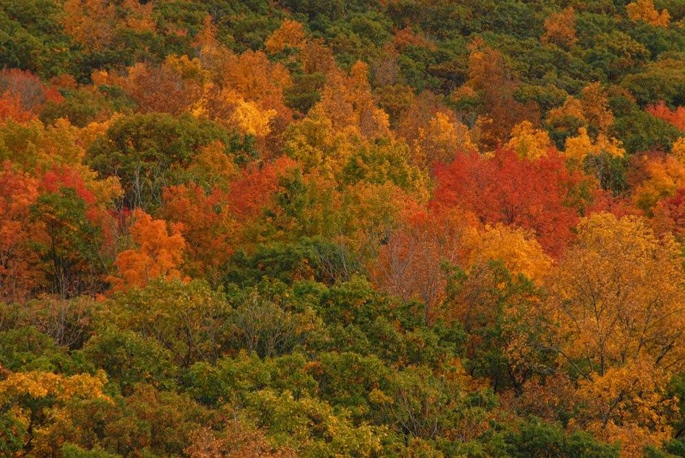 autumninthefingerlakes.jpg