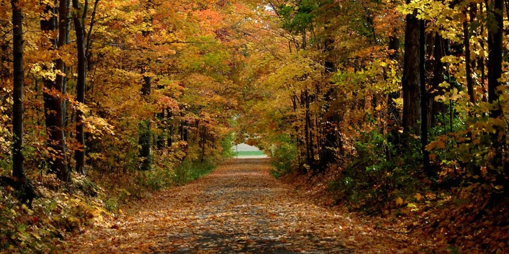 fall_road_-_photo_credit_bill_banaszewski.jpg