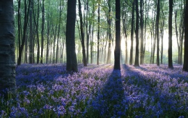 dawn_in_forest-t1