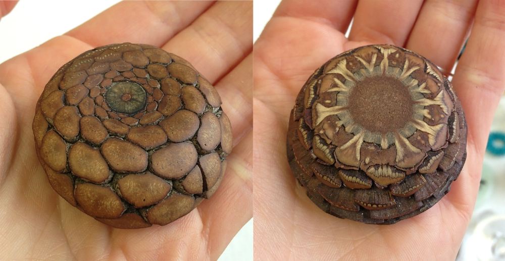 Sanded and Polished Pinecone from Australia