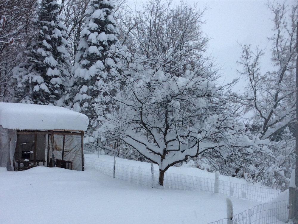 Photo Credit: Donna Motta... Backyard Coop/ Snowy Wonderland!