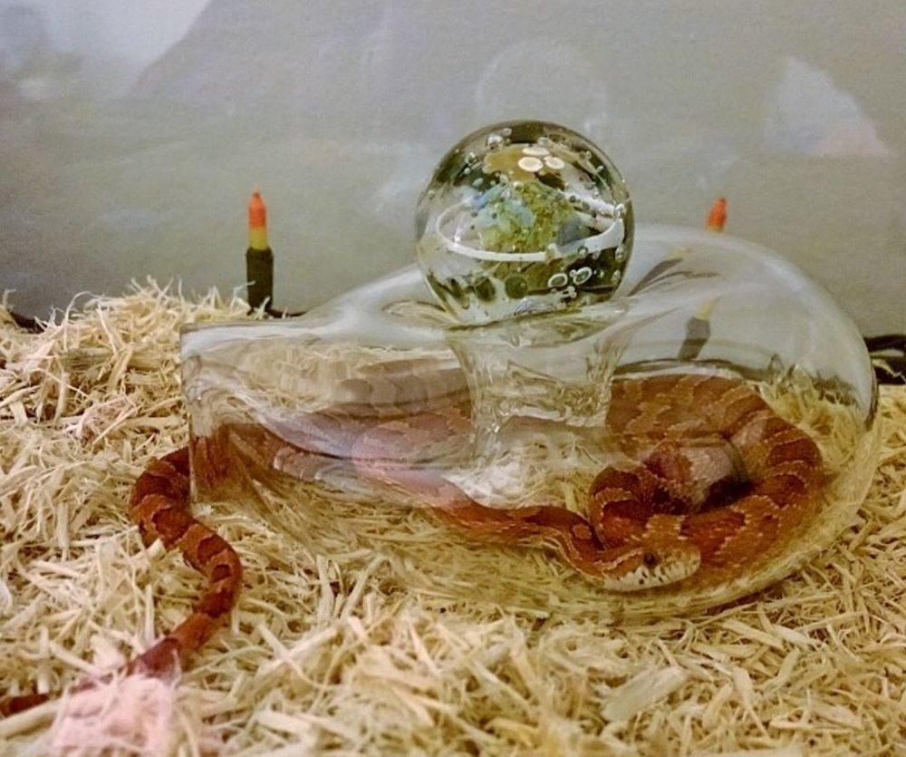 Asha in Glass