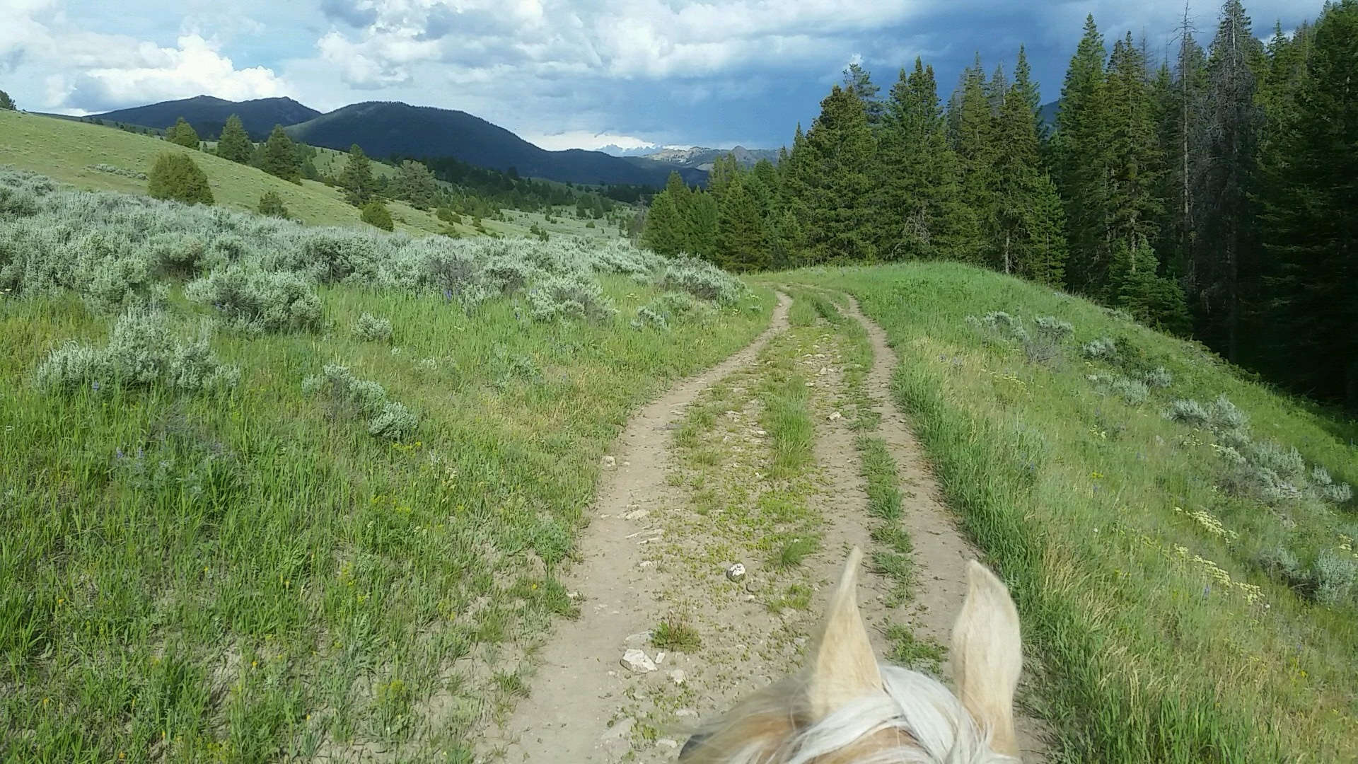 This is Lilly Belle. She is a palomino Missouri Fox Trotter mare. Here we are exploring Porcupine Creek Valley on a stormy July day last summer. She is a particularly sweet girl and i really enjoy spending time with her. Being with Lilly Belle is a relaxing salve.
