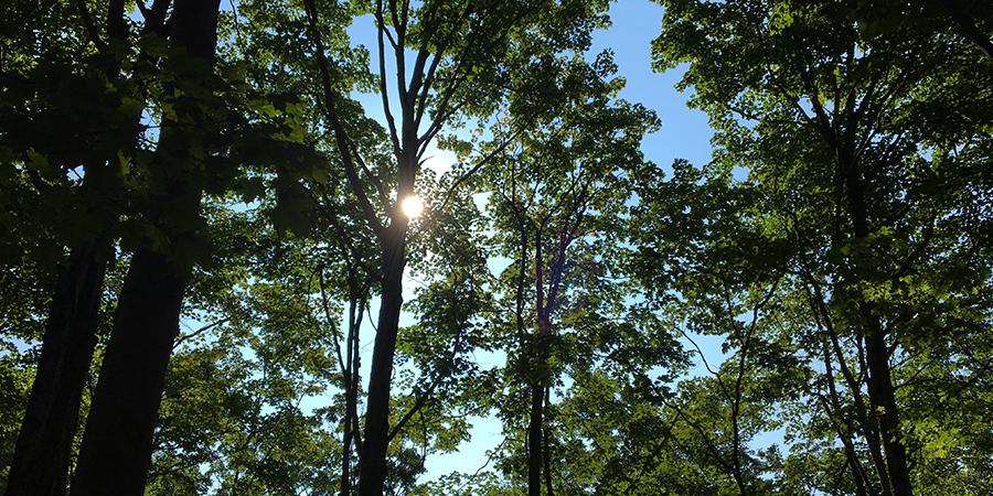 09.17.17 Sunshine through the treetops.jpg