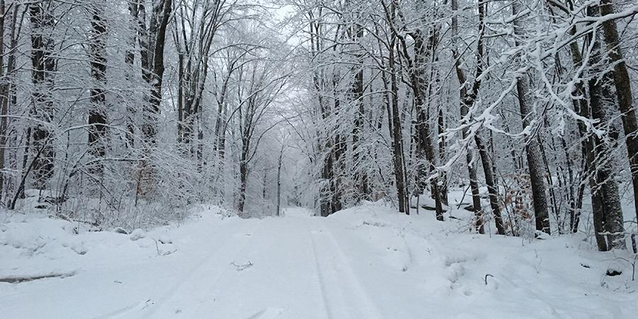 12.26.18 snowy path.jpg