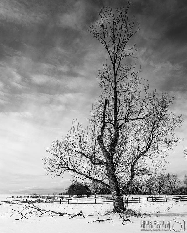 """Alone in winter"" - Knox Farm State Park  _____________________ For more check out my site! www.csnyderphoto.com _____________________  #all_shots #art #beautiful #capture #color #composition #exposure #focus #GetInstaLike #instagood #moment #photo #photography #photooftheday #photos #pic #picoftheday #pics #picture #pictures #snapshot #nikon #nikond7000 #landscapephotography #landscapephotos #winterscape #winterphotography #blackandwhitephotography"