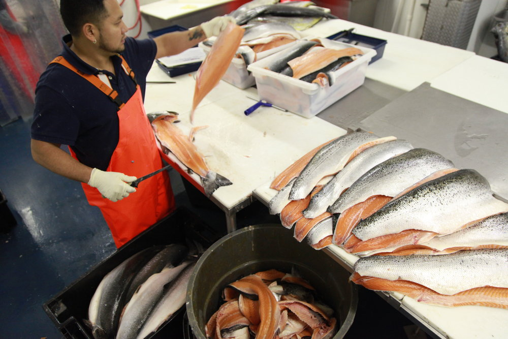 A worker is filleting salmon in the fish factory owned by ProFish Ltd., in Washington, D.C., on Dec. 7, 2015.